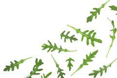 Φύλλο Rucola ή arugula που απομονώνεται στο άσπρο υπόβαθρο με το διάστημα αντιγράφων για το κείμενό σας Τοπ όψη Επίπεδος βάλτε το Στοκ εικόνα με δικαίωμα ελεύθερης χρήσης