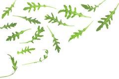 Φύλλο Rucola ή arugula που απομονώνεται στο άσπρο υπόβαθρο με το διάστημα αντιγράφων για το κείμενό σας Τοπ όψη Επίπεδος βάλτε το Στοκ Φωτογραφία