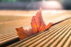 Φύλλο Scyamore που γλιστρά αν και ξύλινο Στοκ εικόνες με δικαίωμα ελεύθερης χρήσης