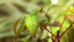 Φύλλωμα εγκαταστάσεων υγρό στο περιβάλλον φύσης βροχής απόθεμα βίντεο