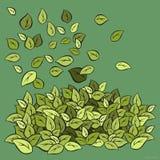 Φύλλωμα που φυσιέται πράσινο Στοκ Εικόνες