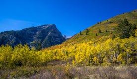 Φύλλωμα πτώσης με τα δέντρα της Aspen κατά μήκος της σειράς βουνών Wasatch Στοκ Εικόνα