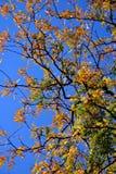 φύλλωμα πτώσης της Αγγλία&s Στοκ φωτογραφία με δικαίωμα ελεύθερης χρήσης