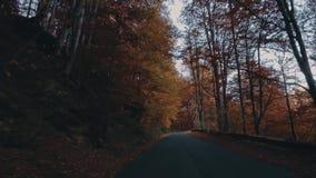 Φύλλωμα φθινοπώρου στο δάσος με το δρόμο φιλμ μικρού μήκους