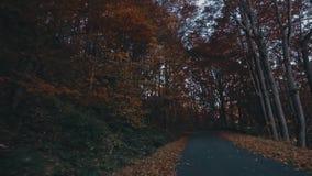 Φύλλωμα φθινοπώρου στο δάσος με το δρόμο απόθεμα βίντεο
