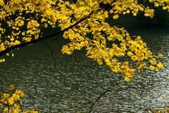 Φύλλωμα φθινοπώρου στο πάρκο στοκ φωτογραφία με δικαίωμα ελεύθερης χρήσης