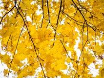 Φύλλωμα φθινοπώρου στο φθινόπωρο Στοκ Φωτογραφίες