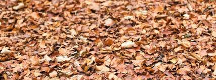 Φύλλωμα φθινοπώρου Φύλλα φθινοπώρου Στοκ εικόνα με δικαίωμα ελεύθερης χρήσης