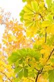 φύλλωμα φθινοπώρου Στοκ Εικόνα