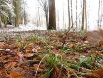 Φύλλωμα, χλόες σε ένα χειμερινό τοπίο στοκ εικόνα