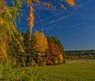 Φύσης πράσινη αλογουρά χλόης πυρκαγιών η πράσινη δασική αυξάνεται τον ουρανό τομέων Στοκ Φωτογραφίες