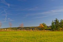 Φύσης πράσινη αλογουρά χλόης πυρκαγιών η πράσινη δασική αυξάνεται τον ουρανό τομέων Στοκ Φωτογραφία