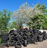 Φύση άνοιξη ενάντια στα παλαιά λαστιχένια ελαστικά αυτοκινήτου στοκ φωτογραφίες