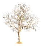 Φύση δέντρων απομονωμένος Στοκ Εικόνα