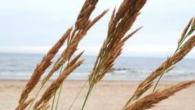 Φύση αέρα θαλασσίων φυτών απόθεμα βίντεο