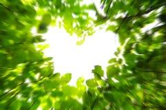 φύση αγάπης έννοιας Στοκ εικόνα με δικαίωμα ελεύθερης χρήσης