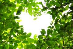 φύση αγάπης έννοιας Στοκ Εικόνες