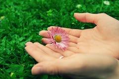 φύση αγάπης έννοιας Στοκ Εικόνα