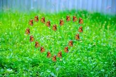 Φύση αγάπης Στοκ εικόνα με δικαίωμα ελεύθερης χρήσης