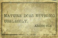 Φύση Αριστοτέλης στοκ φωτογραφία με δικαίωμα ελεύθερης χρήσης