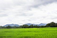 Φύση βουνών λιβαδιών τομέων ρυζιού Στοκ Εικόνες