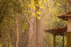 Φύση δέντρων μπαμπού στο καλύτερό του Στοκ εικόνα με δικαίωμα ελεύθερης χρήσης