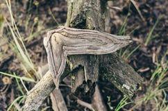 Φύση-δημιουργημένες μορφές και διακοσμήσεις του ξύλου Μαλακό φως στοκ εικόνα με δικαίωμα ελεύθερης χρήσης