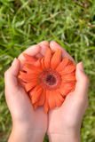 φύση δώρων στοκ φωτογραφίες με δικαίωμα ελεύθερης χρήσης