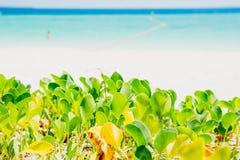 Φύση εγκαταστάσεων αναρριχητικών φυτών ποδιών Στοκ φωτογραφία με δικαίωμα ελεύθερης χρήσης