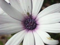 φύση εστίασης ομορφιάς στοκ φωτογραφία