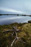 Φύση ελών Στοκ Φωτογραφία