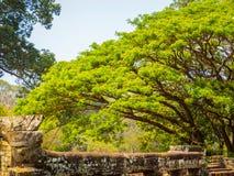Φύση και καταστροφές σε Angkor Thom Στοκ φωτογραφία με δικαίωμα ελεύθερης χρήσης