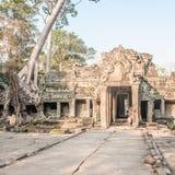 Φύση και ναοί σε Angkor Στοκ εικόνες με δικαίωμα ελεύθερης χρήσης