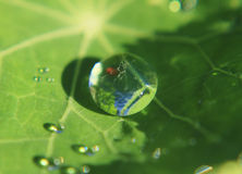 Φύση και νερό, πράσινο φύλλο με τη δροσοσταλίδα, όλες φυσικές Στοκ φωτογραφία με δικαίωμα ελεύθερης χρήσης