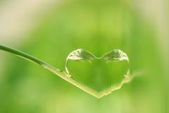 φύση καρδιών Στοκ Φωτογραφίες