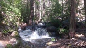 Φύση Καλιφόρνιας Στοκ εικόνες με δικαίωμα ελεύθερης χρήσης