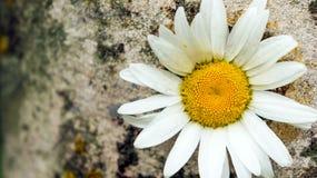 Φύση Καλοκαίρι Στοκ φωτογραφία με δικαίωμα ελεύθερης χρήσης