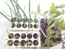 Φύση κηπουρικής Στοκ φωτογραφία με δικαίωμα ελεύθερης χρήσης