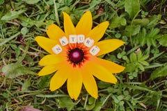 Φύση λέξης των χαντρών αλφάβητου σε ένα κίτρινο λουλούδι rudbeckia Στοκ φωτογραφία με δικαίωμα ελεύθερης χρήσης