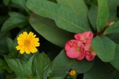 φύση λουλουδιών στοκ εικόνα με δικαίωμα ελεύθερης χρήσης