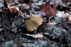 Φύση μανιταριών στοκ φωτογραφία με δικαίωμα ελεύθερης χρήσης