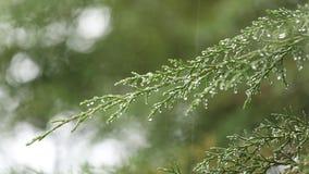 Φύση μετά από τη βροχή Πράσινο φύλλο, βρέχοντας χρόνος κήπος τροπικός φιλμ μικρού μήκους