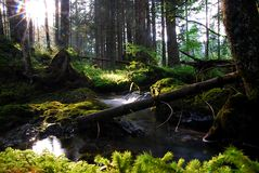 φύση ομορφιάς Στοκ Εικόνα