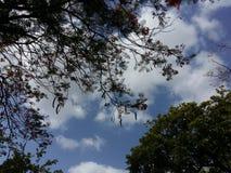 Φύση ουρανού στοκ εικόνα με δικαίωμα ελεύθερης χρήσης