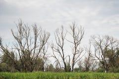 Φύση ουρανός Ξηρά δέντρα Χλόη στοκ εικόνες