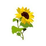 Φύση λουλουδιών ηλίανθων ελεύθερη απεικόνιση δικαιώματος