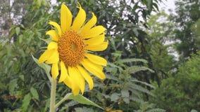 Φύση, λουλούδι, καλοκαίρι φιλμ μικρού μήκους