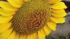 Φύση, λουλούδι, καλοκαίρι απόθεμα βίντεο