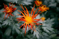 Φύση-λουλούδι-0002 Στοκ εικόνα με δικαίωμα ελεύθερης χρήσης