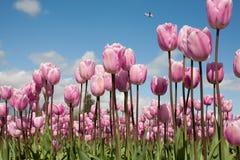 Φύση-λουλούδι-0002 Στοκ Εικόνα